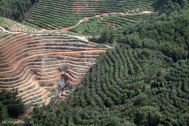 Advantages of tree plantation essay write my essay now