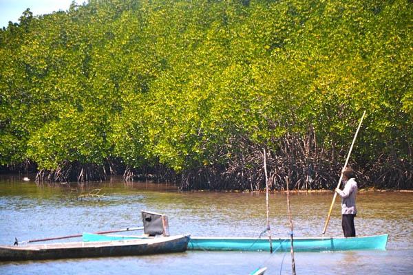 Peraturan Desa 2013 Contoh Peraturan Desa Tentang Bpd Slideshare Desa Menginisiasi Peraturan Desa Tentang Pengelolaan Mangrove Foto