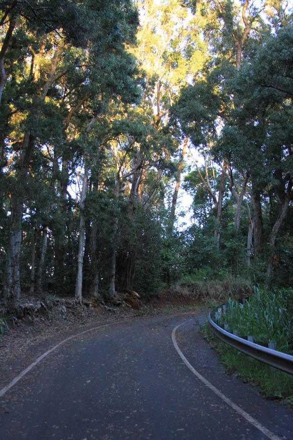 Pupukea Path, at the grommom.com