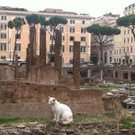 Cats Vs the Coliseum:  Battle of Rome Attractions