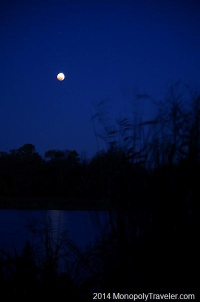Blood Moon In the Night Sky