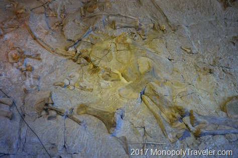 Fossils still partially buried in the hillside inside of the quarry exhibit hall