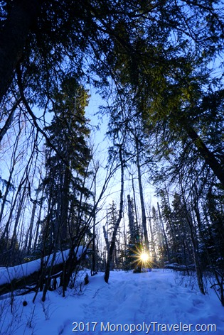 The low sun in the horizon shining through the tall trees