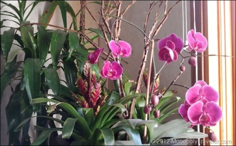 Purple Orchid Loaded with Flowers