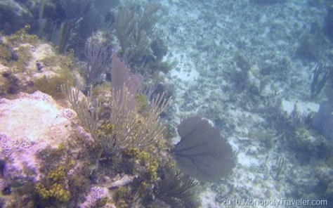 Coral using digital camera with an underwater case