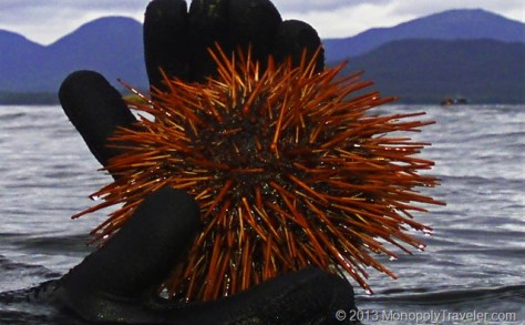 Holding a Red Sea Urchin