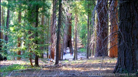 The California Tunnel Tree