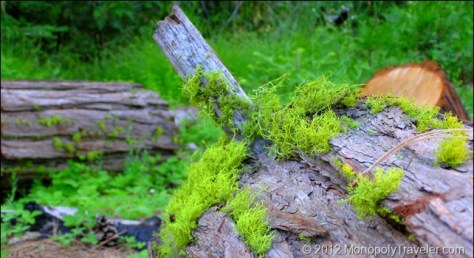 Closeup of the Moss