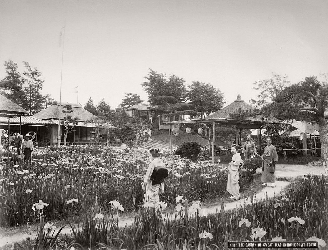 Bamboo Garden In Kyoto Japan Vintage: Japan In The Late Xix Century (meiji Period
