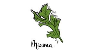 illustration chou mizuma mon petit balcon au potager