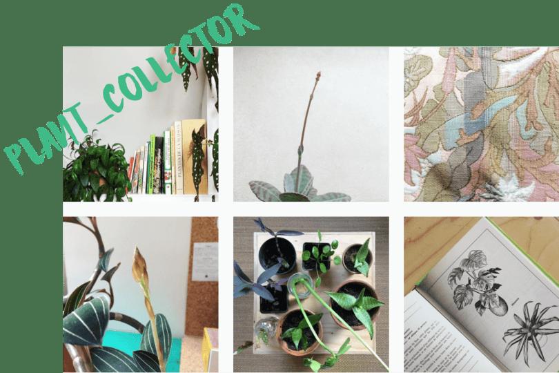 10 comptes Instagram pour voir la vie en vert en 2017 plant collector