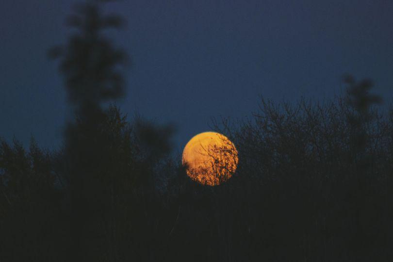 Semer avec la lune en mars des fleurs sur un balcon