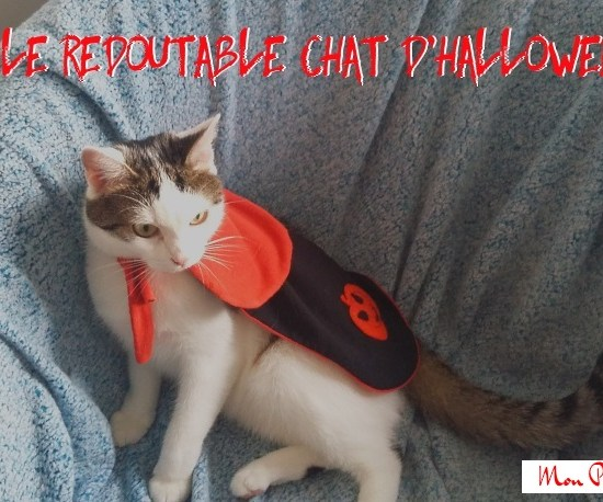 le-redoutable-chat-d-halloween-ade