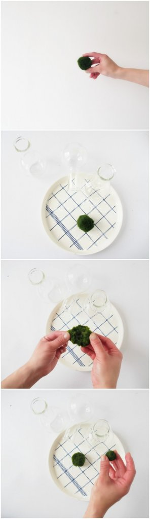 how to grow marimo balls very fast