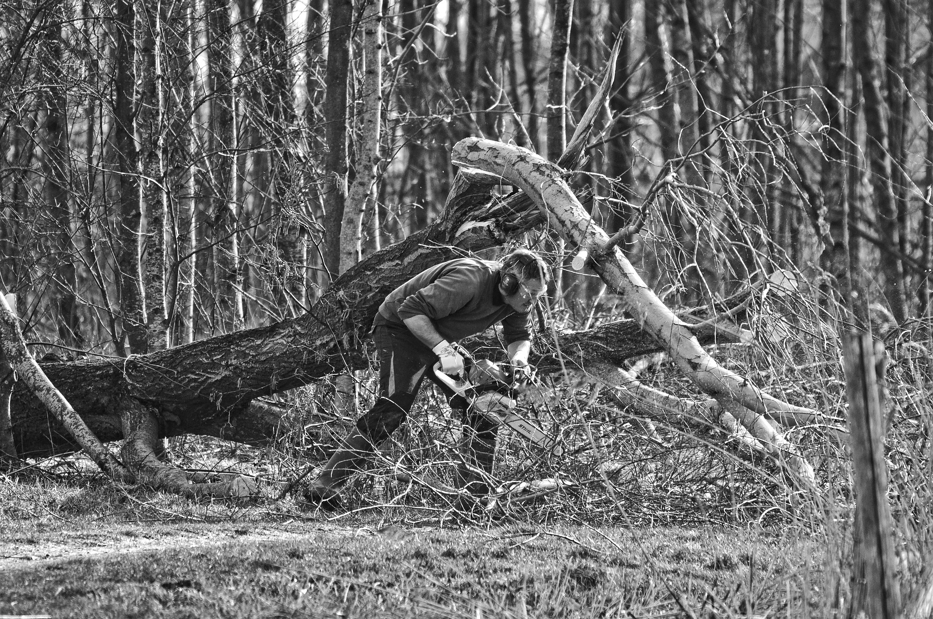 Tree Cutter How To Find Out The Cost Of A Tree Lopping Service The Monument