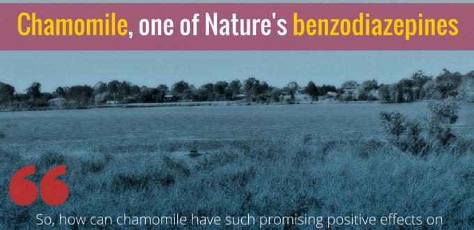 Chamomile, one of Nature's benzodiazepines
