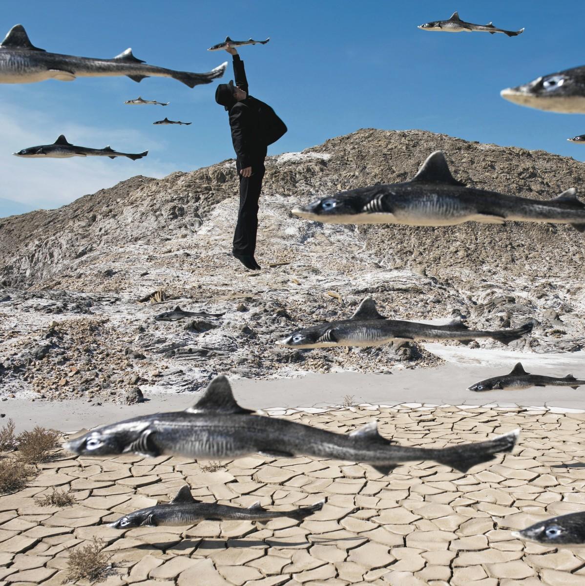 Quand les poissons auront des ailes   When fish start to fly   ? Quentin Bertoux / Agence VU