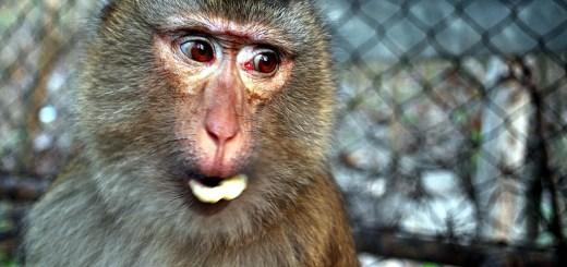 猴年2016吉祥話 | 猴年新年祝賀詞2016