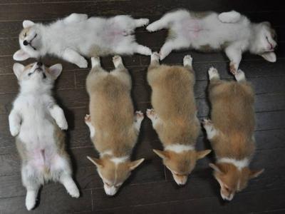 【犬画像】ボケて(bokete)のおもしろワンちゃん30選!