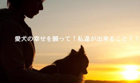 モラキジドッグ 愛犬の死