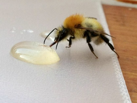 How To Revive Tired Bees Moral Fibres - UK Eco Green Blog
