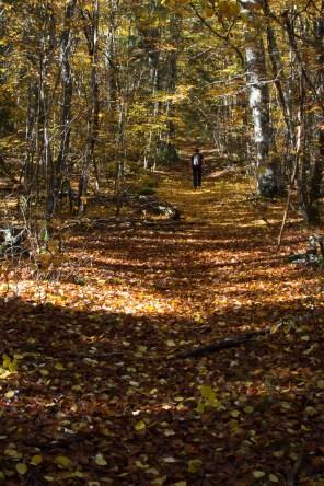 L'automne est là et les feuilles cramoisies recouvrent le sol dans le bois de l'Allier