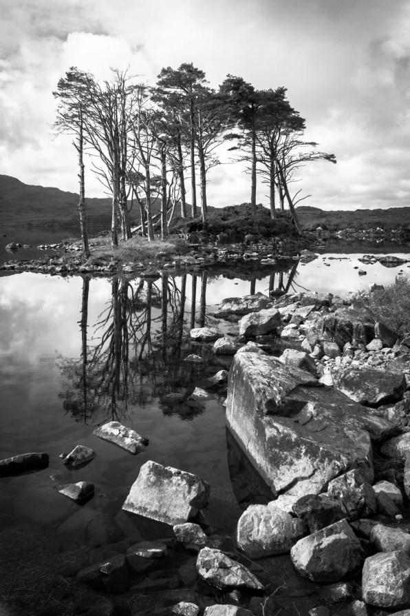 Les arbres persistent seulement sur les îlots comme celui-ci sur le Loch Assynt