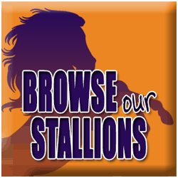 Browse our Stallions