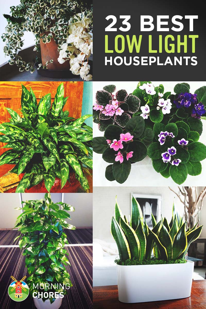 Indoor Plants For Low Light 23 Low Light Houseplants That Are Easy To Maintain Even If You Re Busy