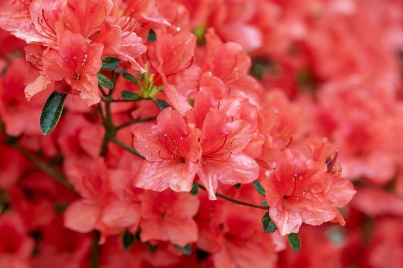 43 Acid-Loving Plants That Will Grow Well on Acidic Soil