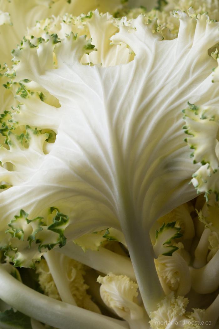 white_cabbage_detail