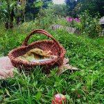 IMG_1400-apple-basket-wagon