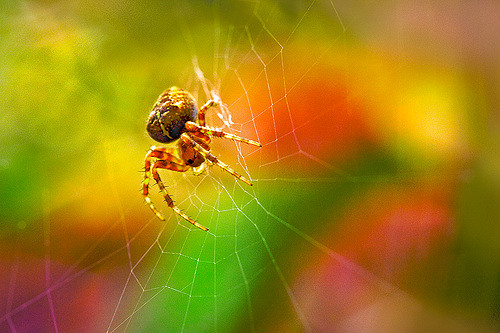 bokeh and spider