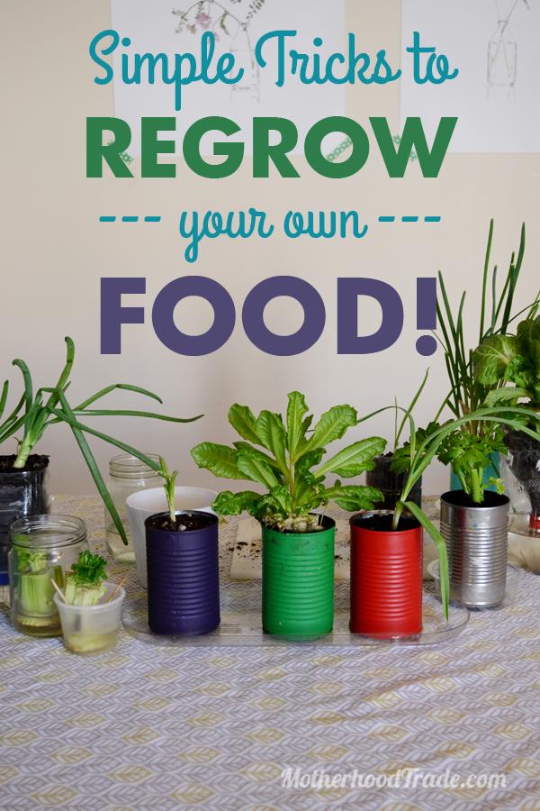 regrowfood