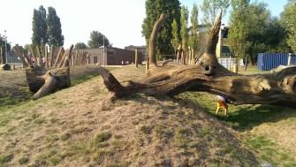 Hiding under a 'fallen' tree