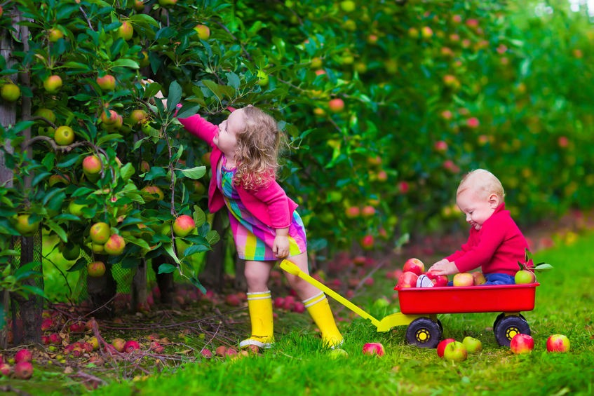 Fall Flowers And Pumpkins Wallpaper 6 Fun Fall Activities For Atypical Kids Mothering