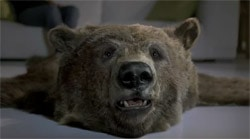 bear-director
