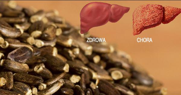 Które zioło najmocniej odtruwa i regeneruje wątrobę?