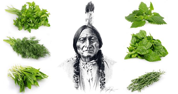 12 roślin, które stosowali Indianie do leczenia wszystkich dolegliwości.