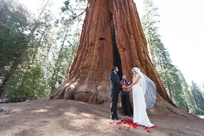 Sequoia National Park elopement | Photography by Bergreen Photography