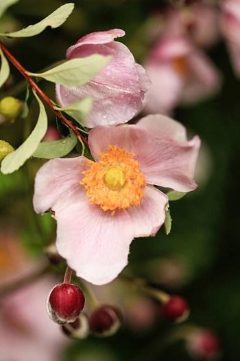 garden flowers | Snowbird Utah Wedding Logan Walker Photography