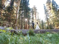 Getting Married Off-the-Grid in Sequoia National Park pt 2| Bergreen Photography