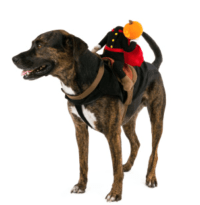 Most Adorable Pet Costumes for Halloween | Movie TV Tech ...