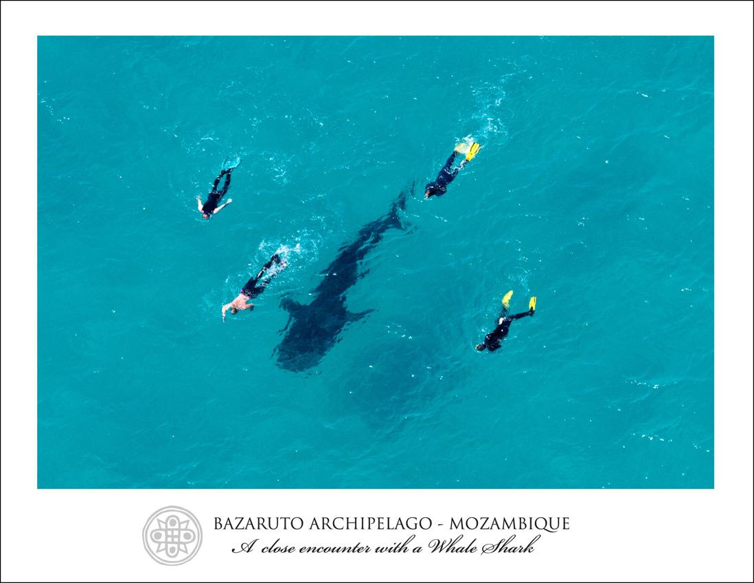 Wallpapers Hd Tattoo Bazaruto Archipelago Mozambique Tattoo Design Bild