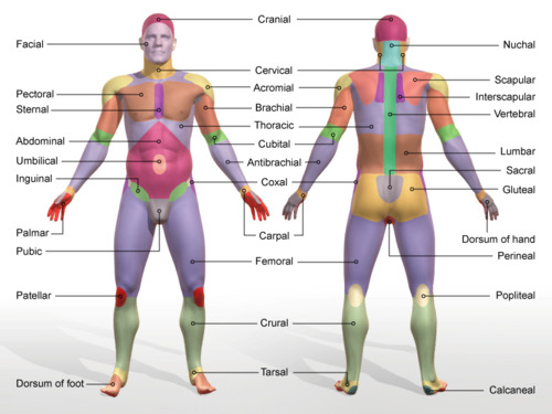 Blog Archives - The human body