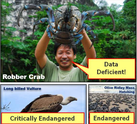 Crab Vulture & Turtles IUCN redlist status