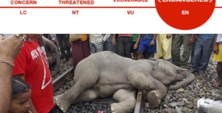 Sterilize them, No elephants =No deaths, says W.Bengal Government!