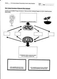 Photosynthesis Vs Cellular Respiration Worksheet | www ...