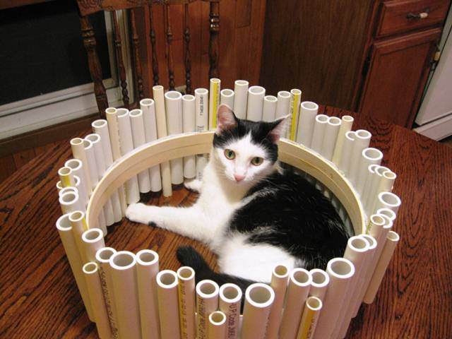 construction kitties (2)