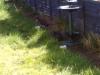 Meeting kitten 1